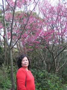 胡媽媽與櫻花