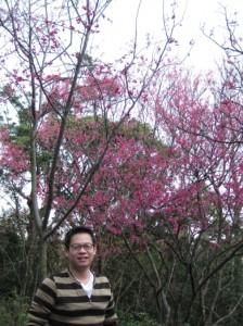胡丁丁與櫻花