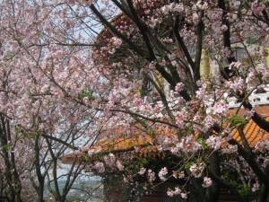 2010-03-02 無極天元宮