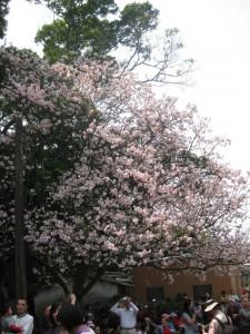 2010-3-12 無極天元宮