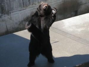 熊牧場的揮手熊