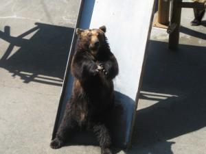 熊牧場的拜託熊